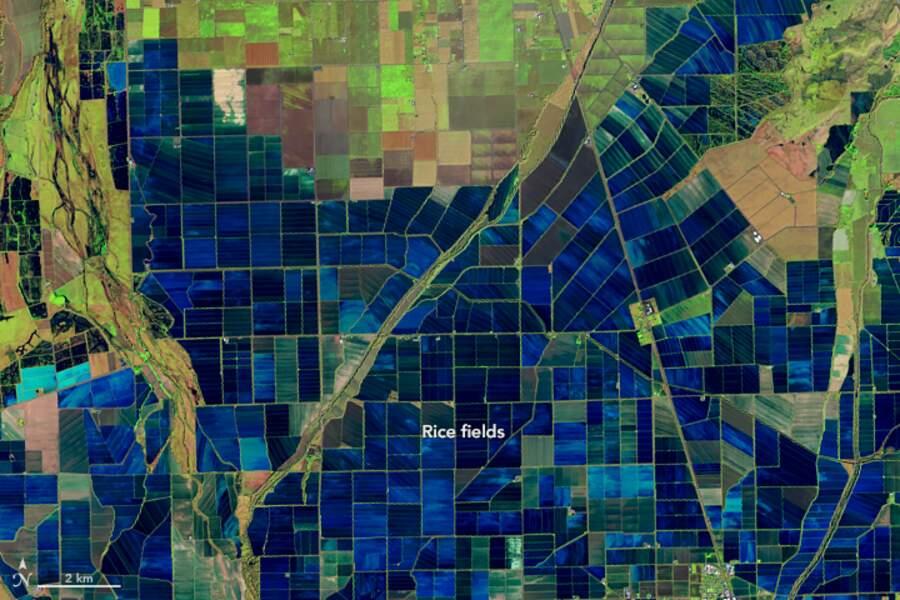 La mosaïque des champs de riz de la vallée de Sacramento