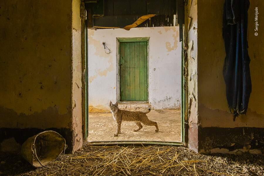 Un lynx aux portes