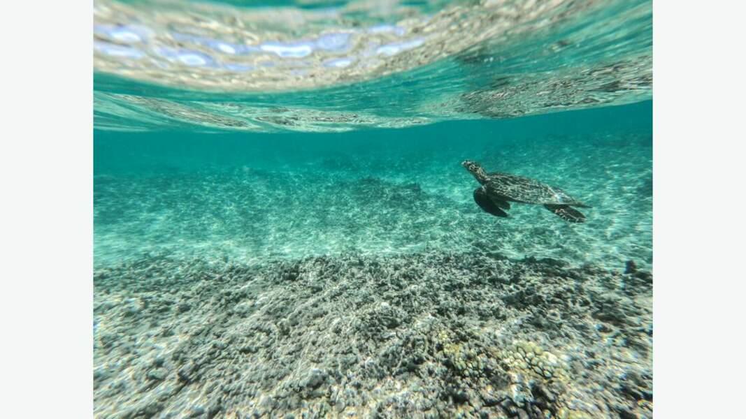 Un récif corallien en danger, Laure Tezier