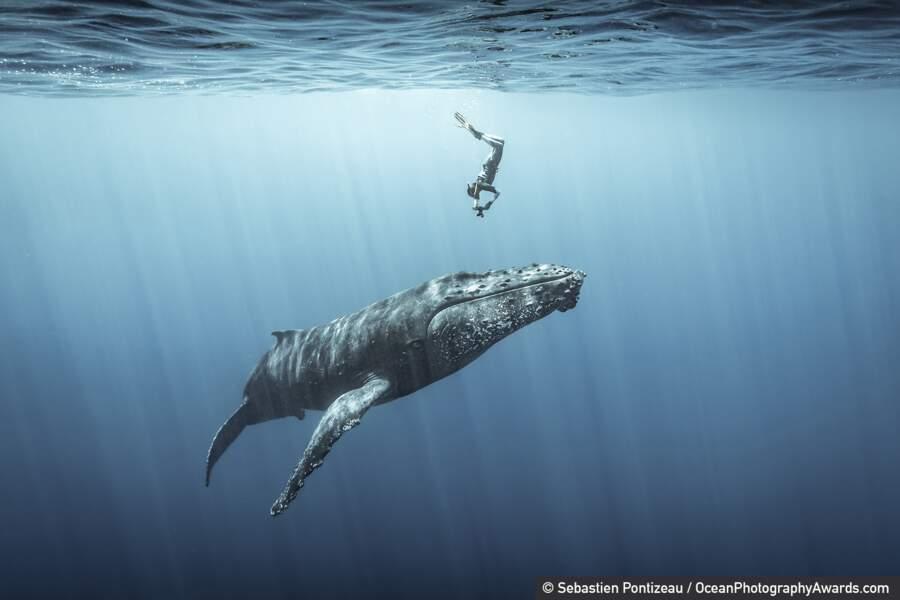 A la rencontre de la baleine