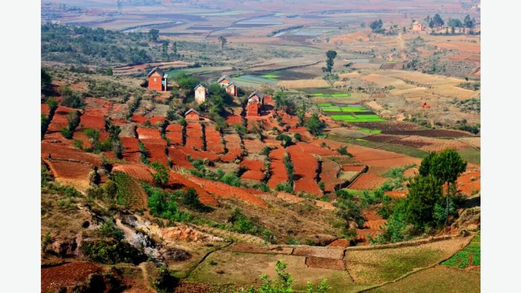 Cultures malgaches