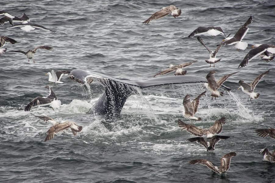 Baleines massacrées