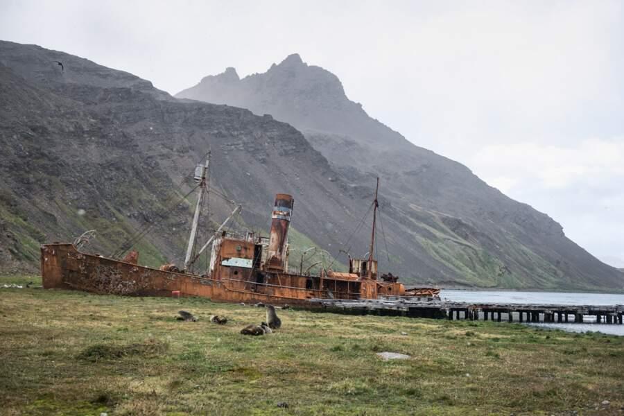 Le Petrel à vapeur, ancien baleinier