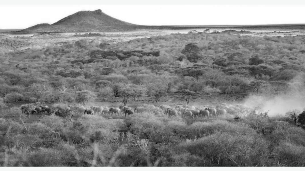 Immersion au coeur du pays Maasaï