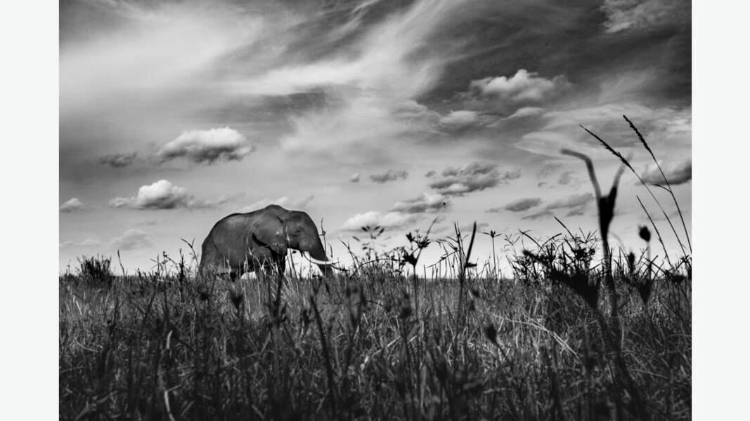 A ras d'éléphant