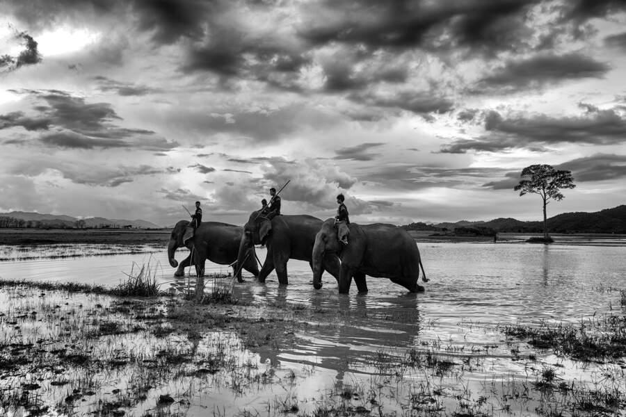 Chez les Mnong, l'éléphant fait partie de la famille