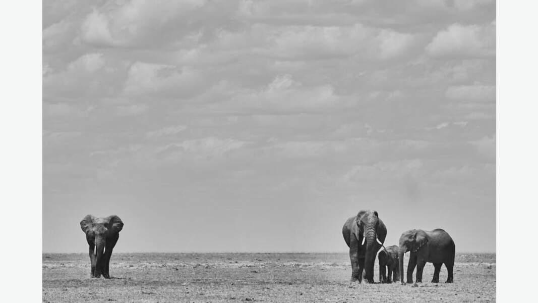 Eléphants du parc d'Amboseli