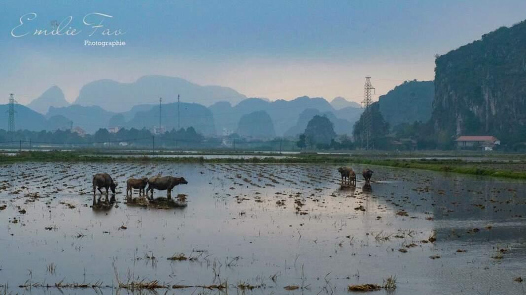 Magie des rizières vietnamiennes
