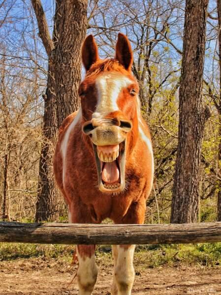 Très à cheval sur l'humour